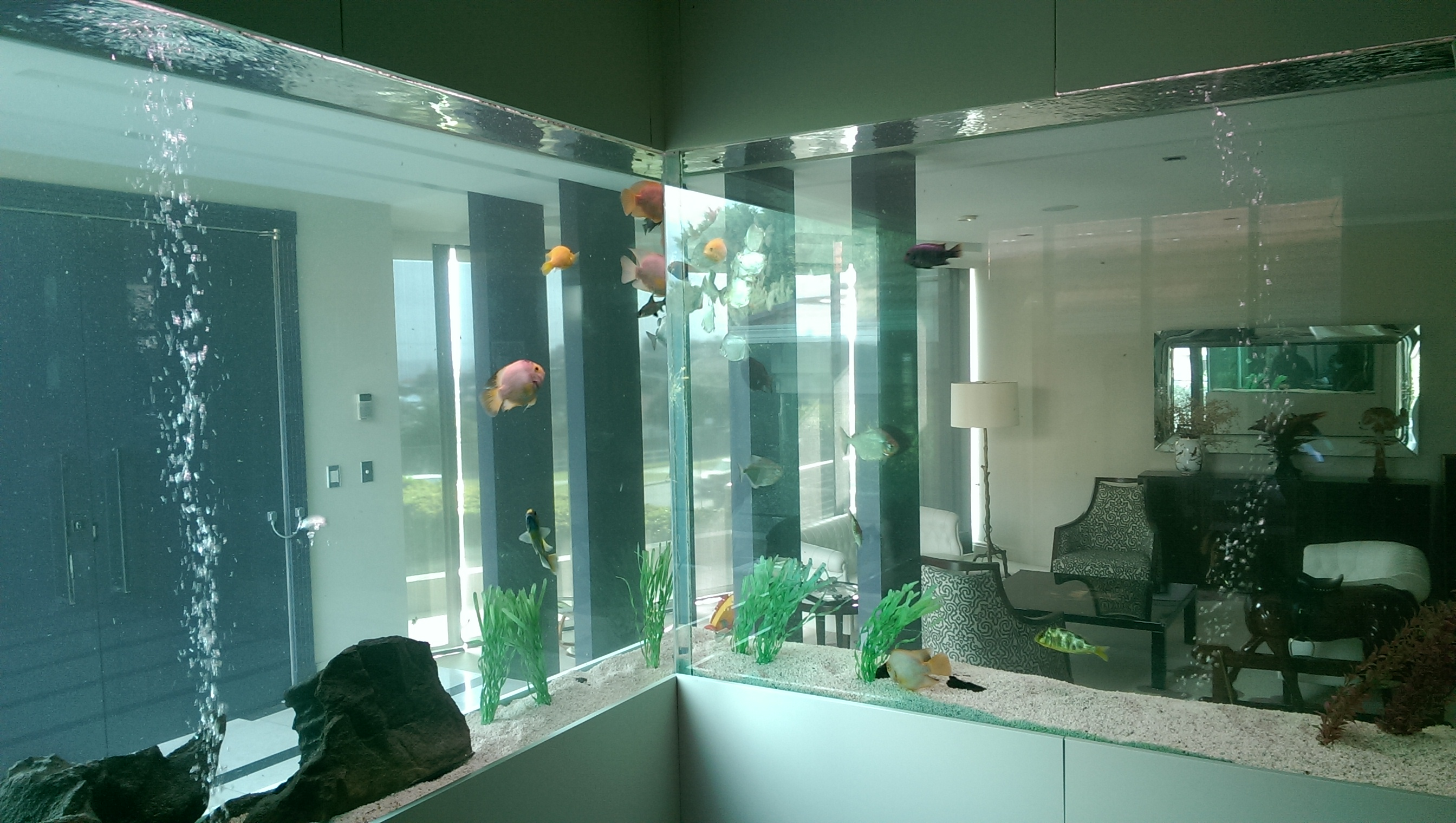 Large tropical aquarium install