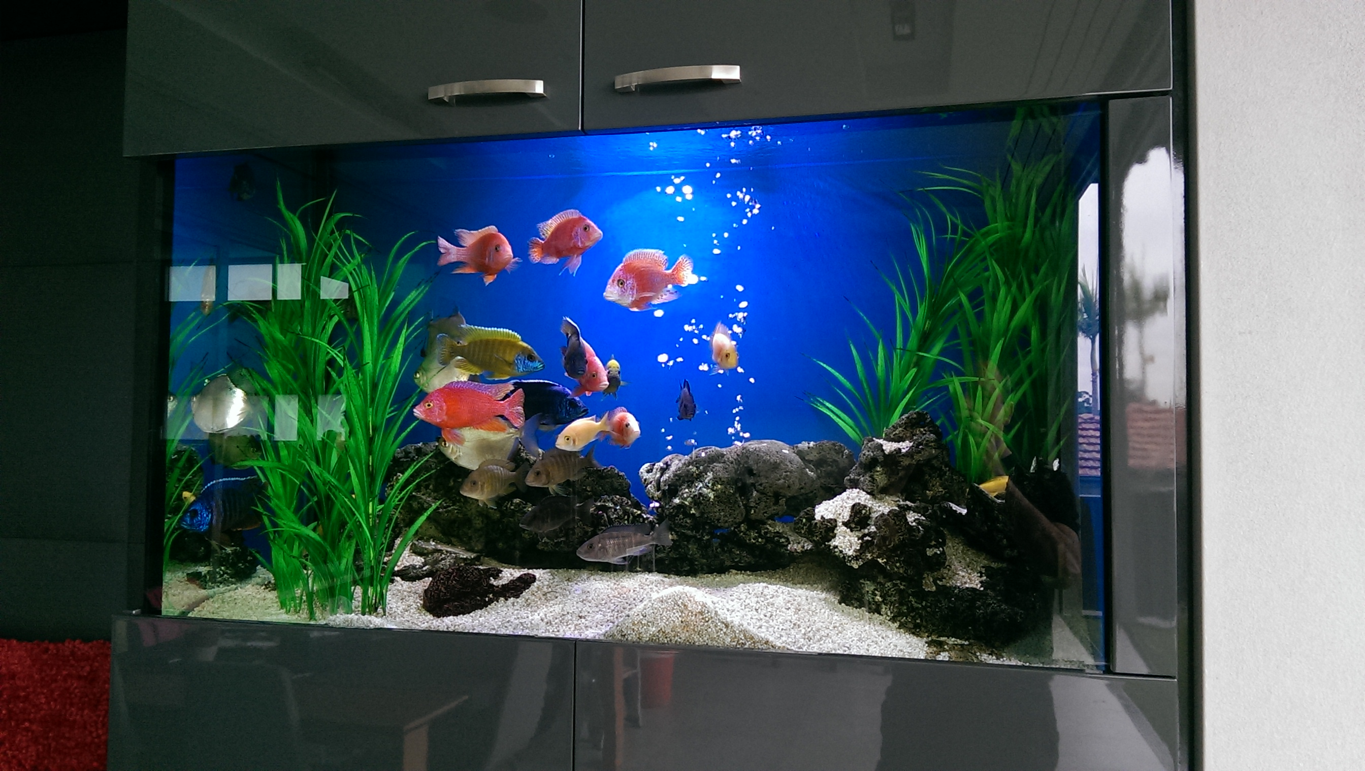 Tropical aquarium install