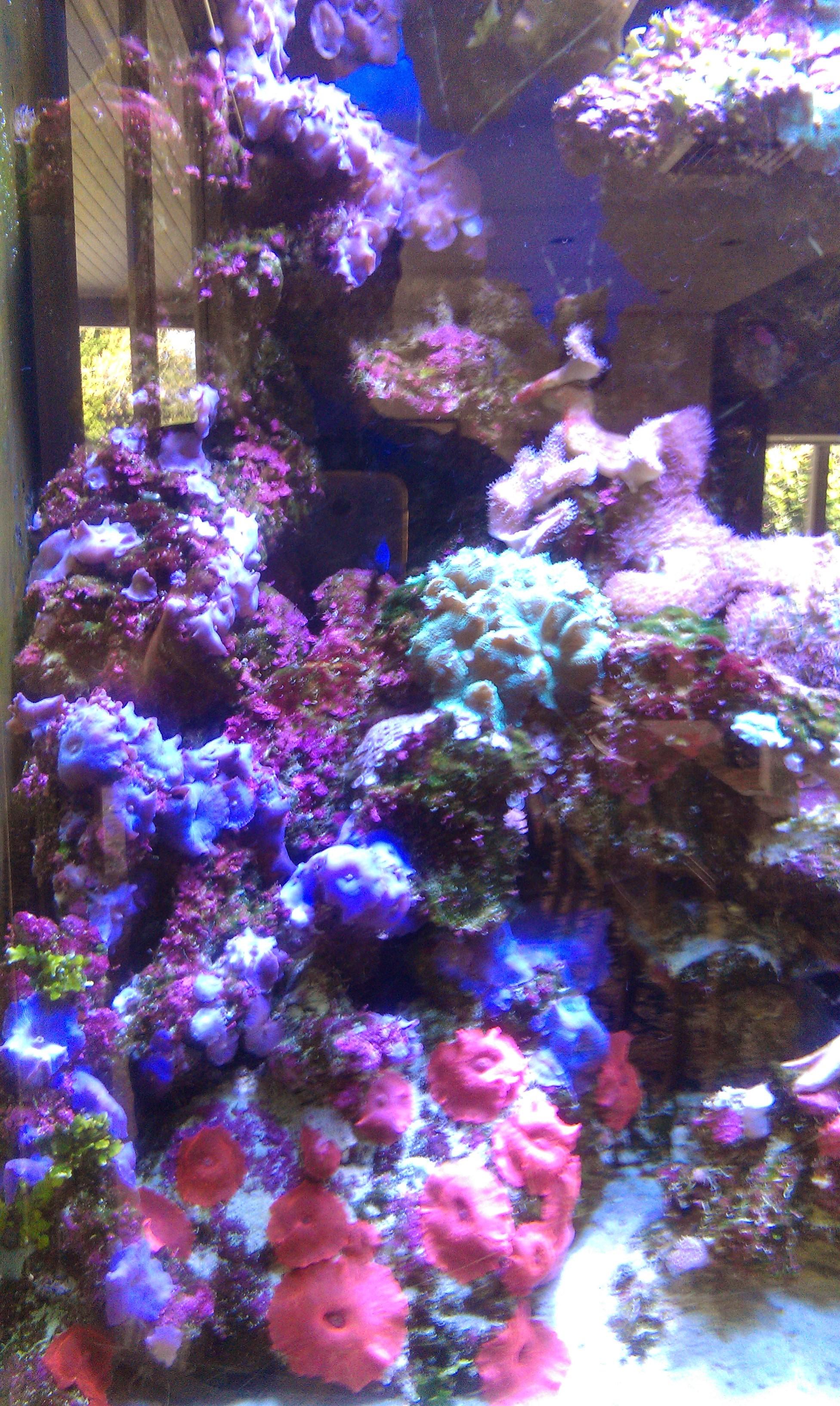 Marine reef aquarium