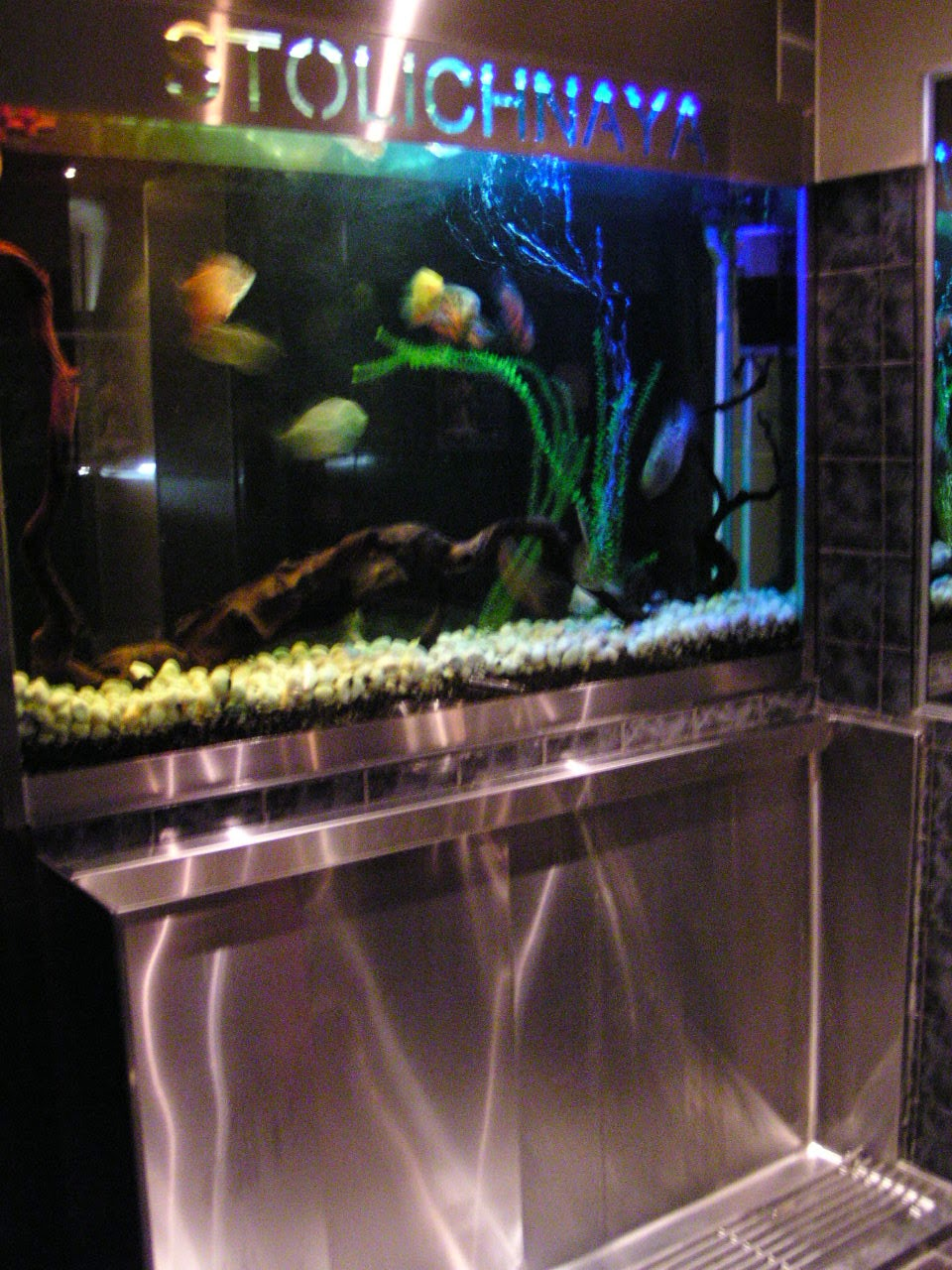 Large tropical aquarium