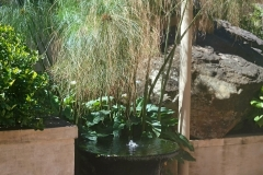 Plant and water feature goldfish pond