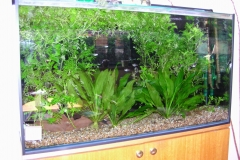 Tropical planted aquarium