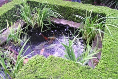 Koi and plant pond