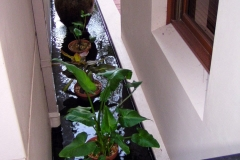 Water feature koi and plant pond